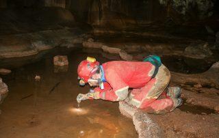 Sakupljanje faune s površine vode (foto: K. Miculinić)
